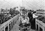 The Greenhouse ca. 1915 by Winthrop University
